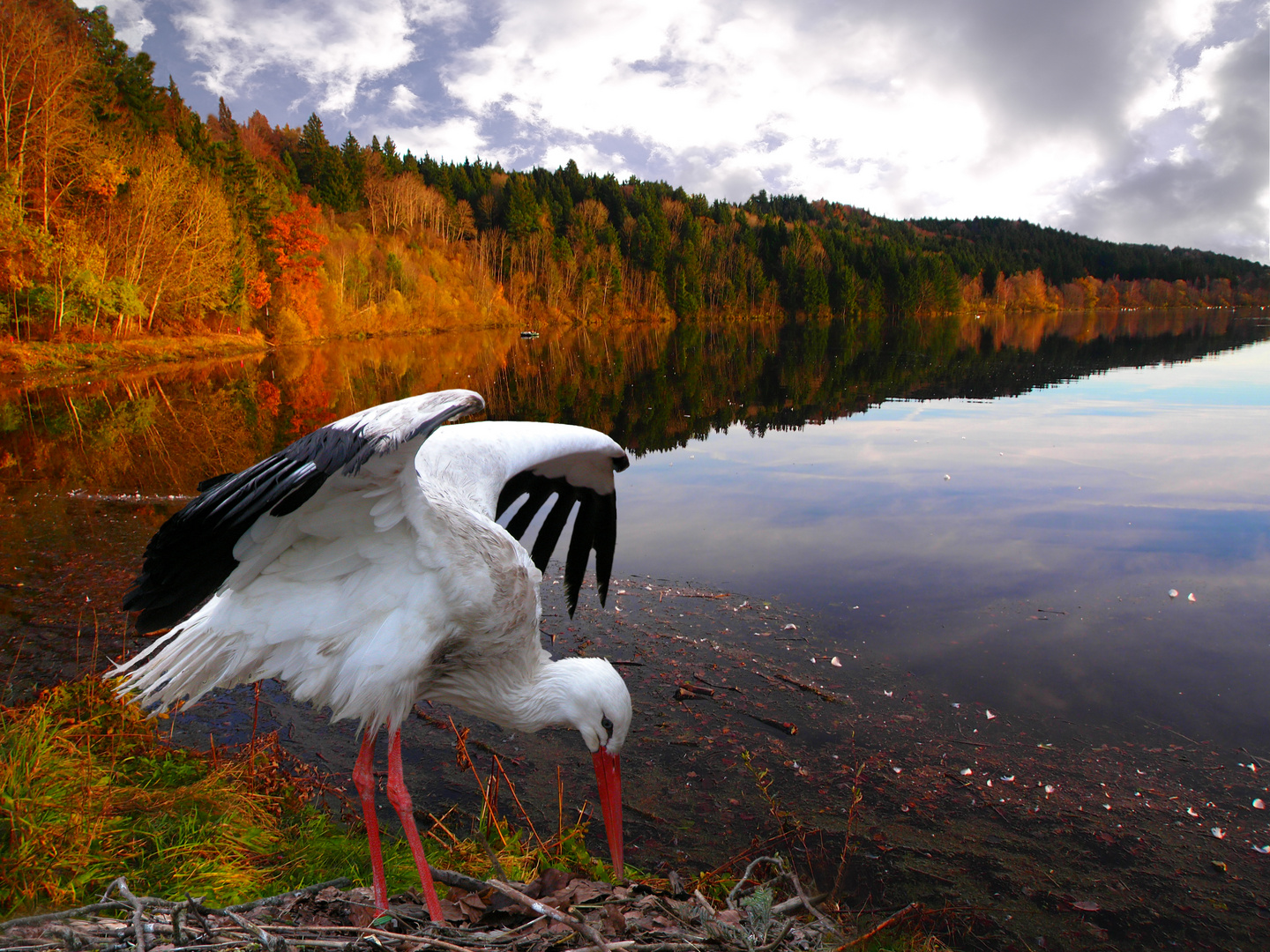 Storch am See