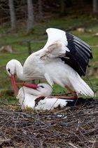 Storch - bitte nicht mit so dreckigen Pfoten