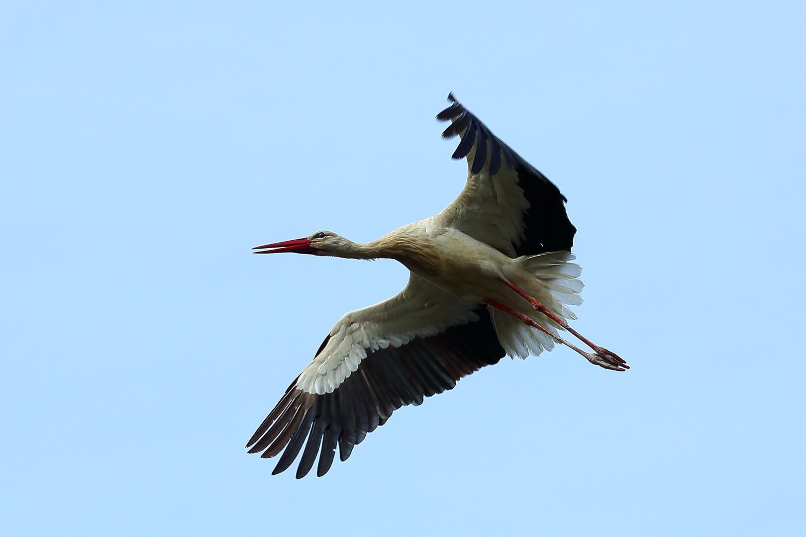 Storch im Luisenpark Mannheim (III)