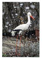 Storch im Schnee