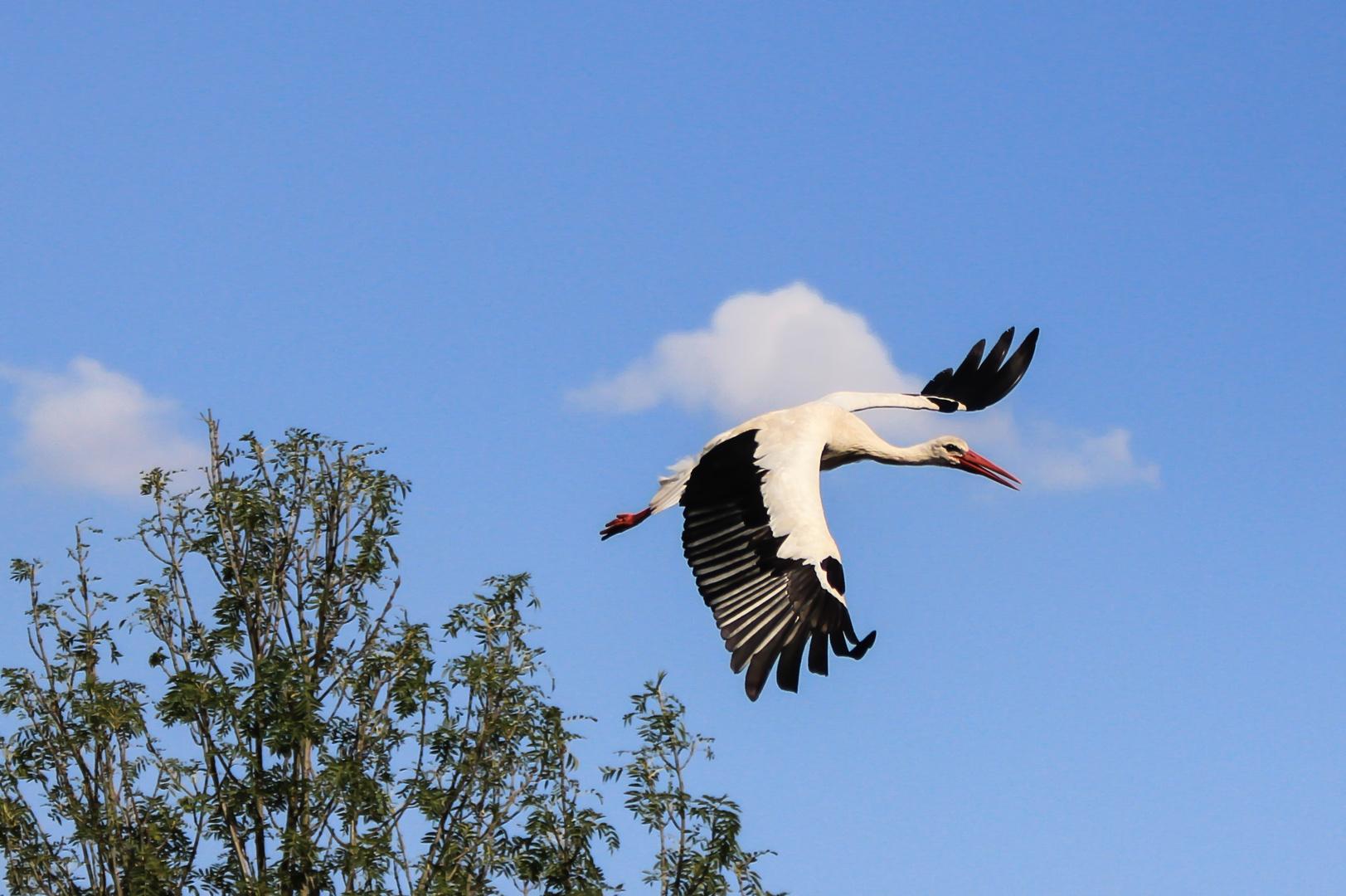 Storch in Sicht