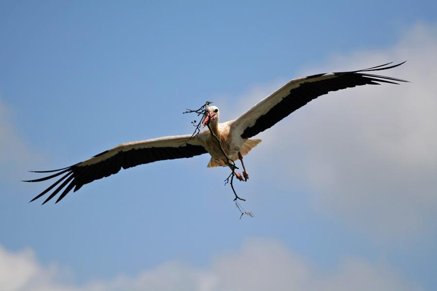 Storch mit Ast oder doch Ast mit Storch?