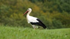 storch sept