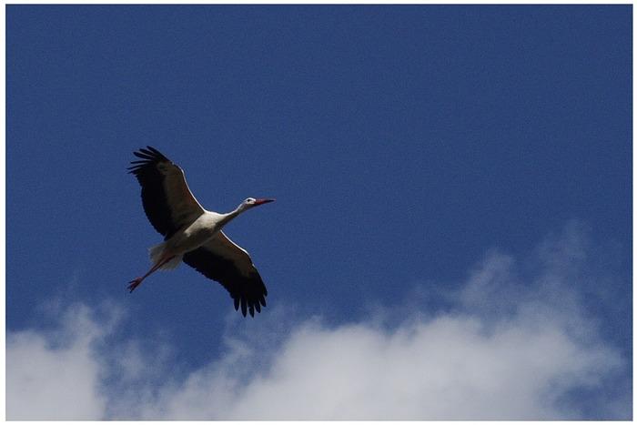 Storch unterwegs ........