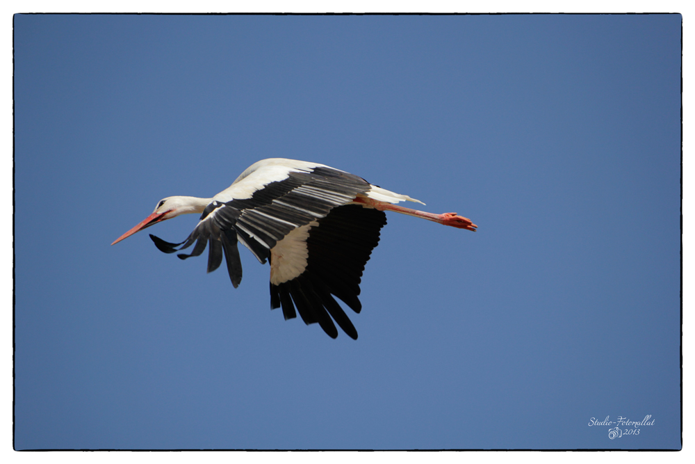Storch1...