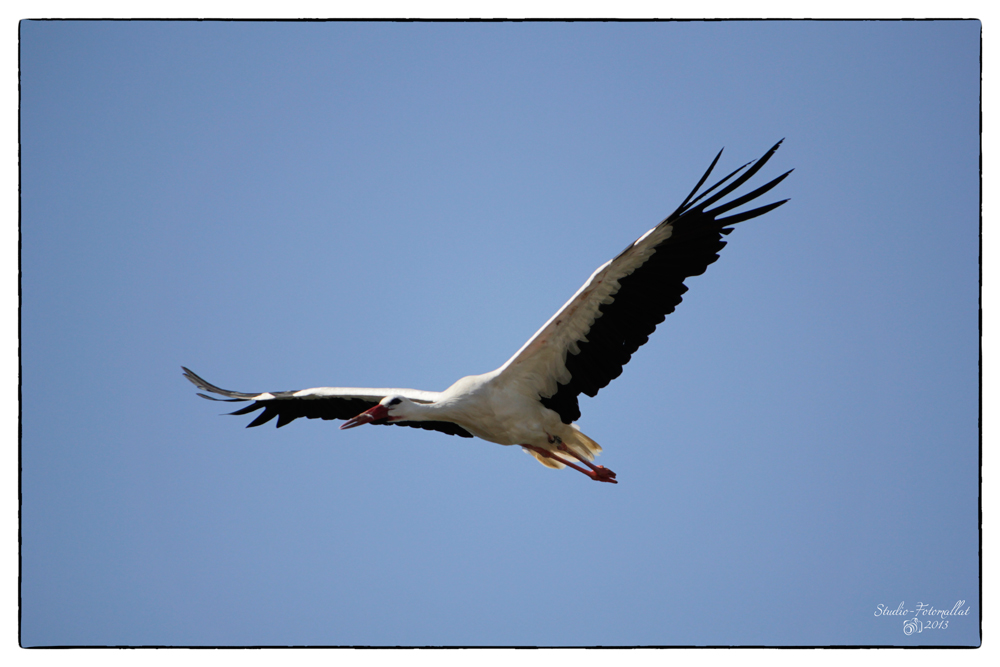 Storch2...