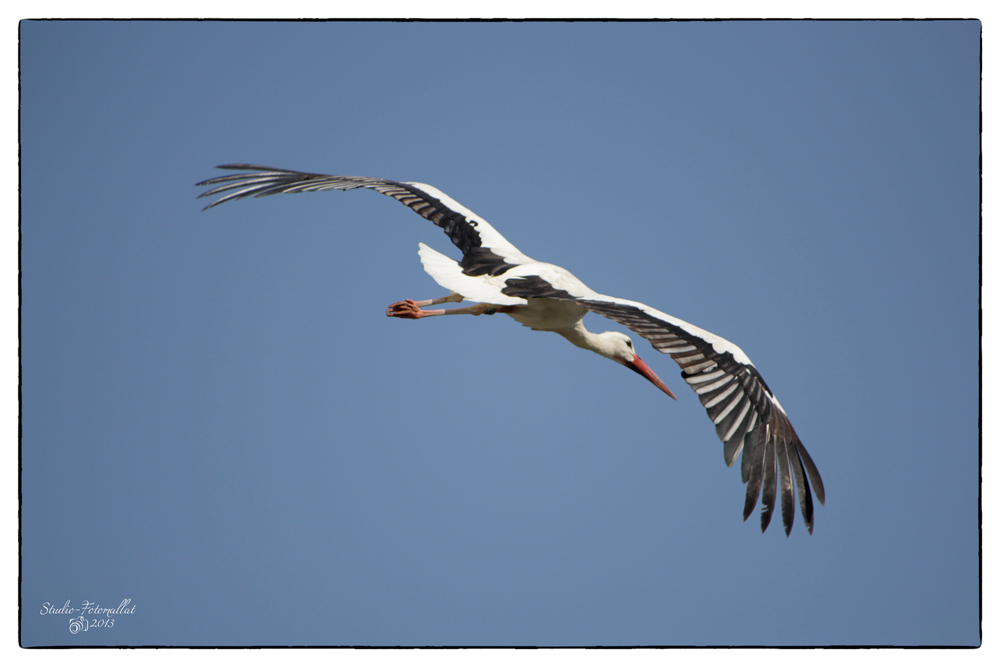 Storch3...