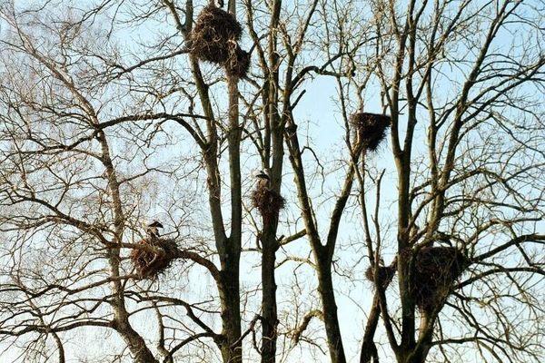 Storchen bei der Lützelsee