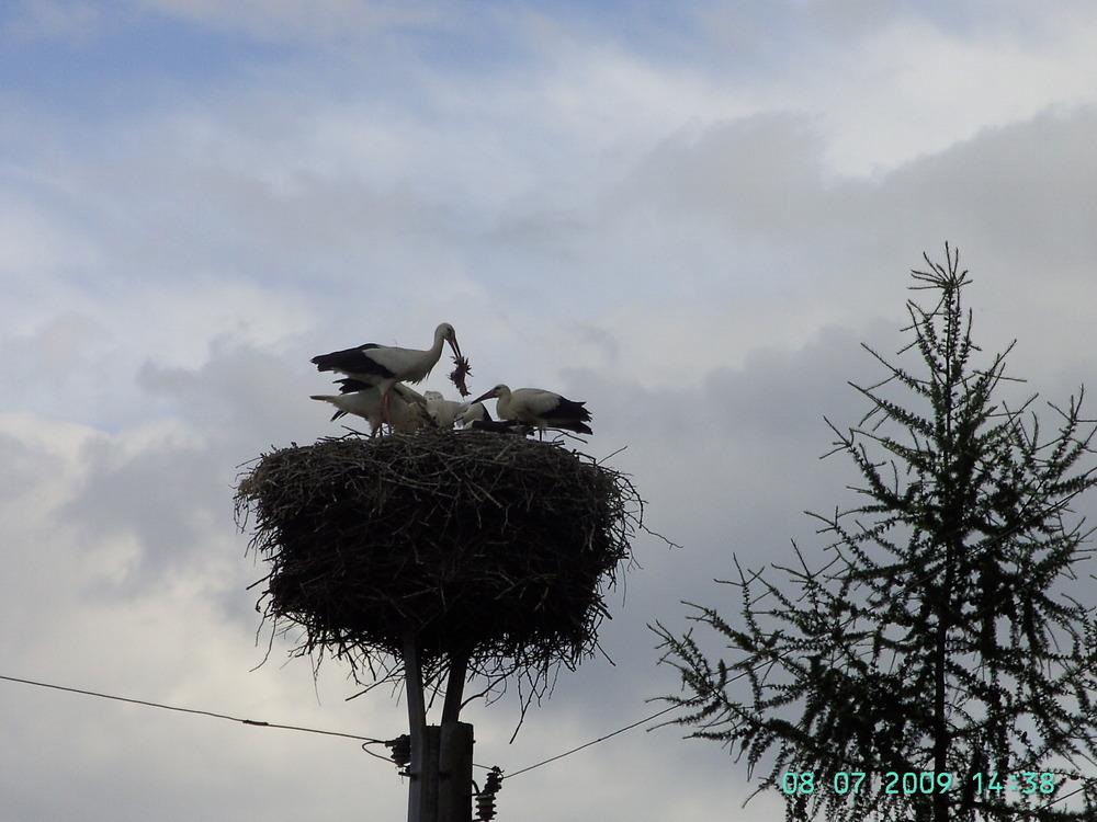Storchenkinder