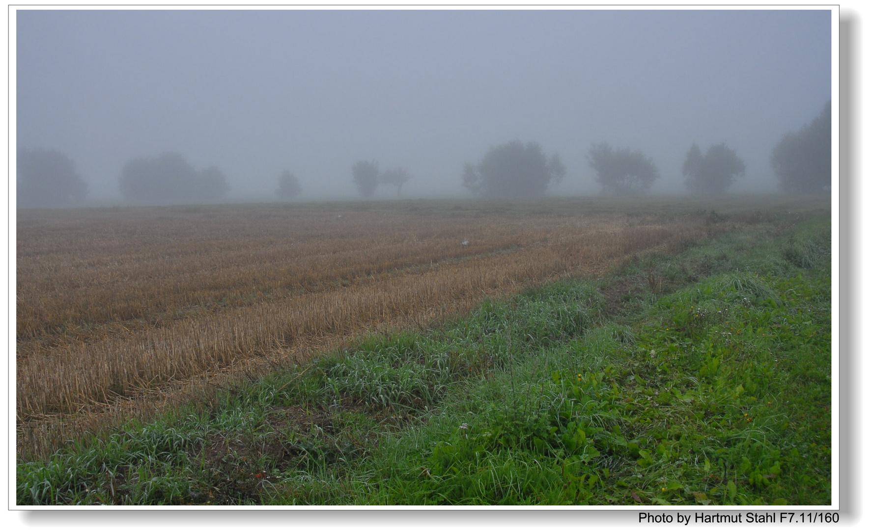 Stppelfeld am Morgen ( campo de rastrojo por la mañana)