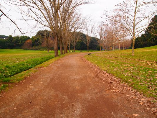 ...strada nel parco