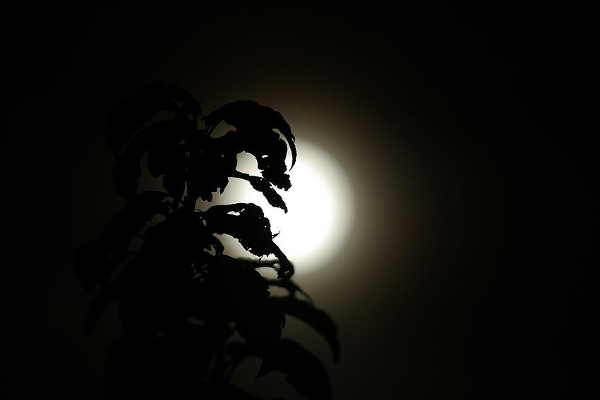 Sträucher im Mondschein