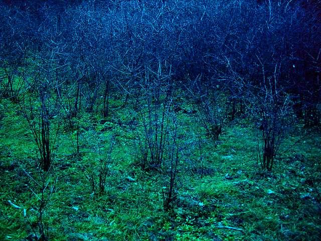 Sträucherlabyrinth