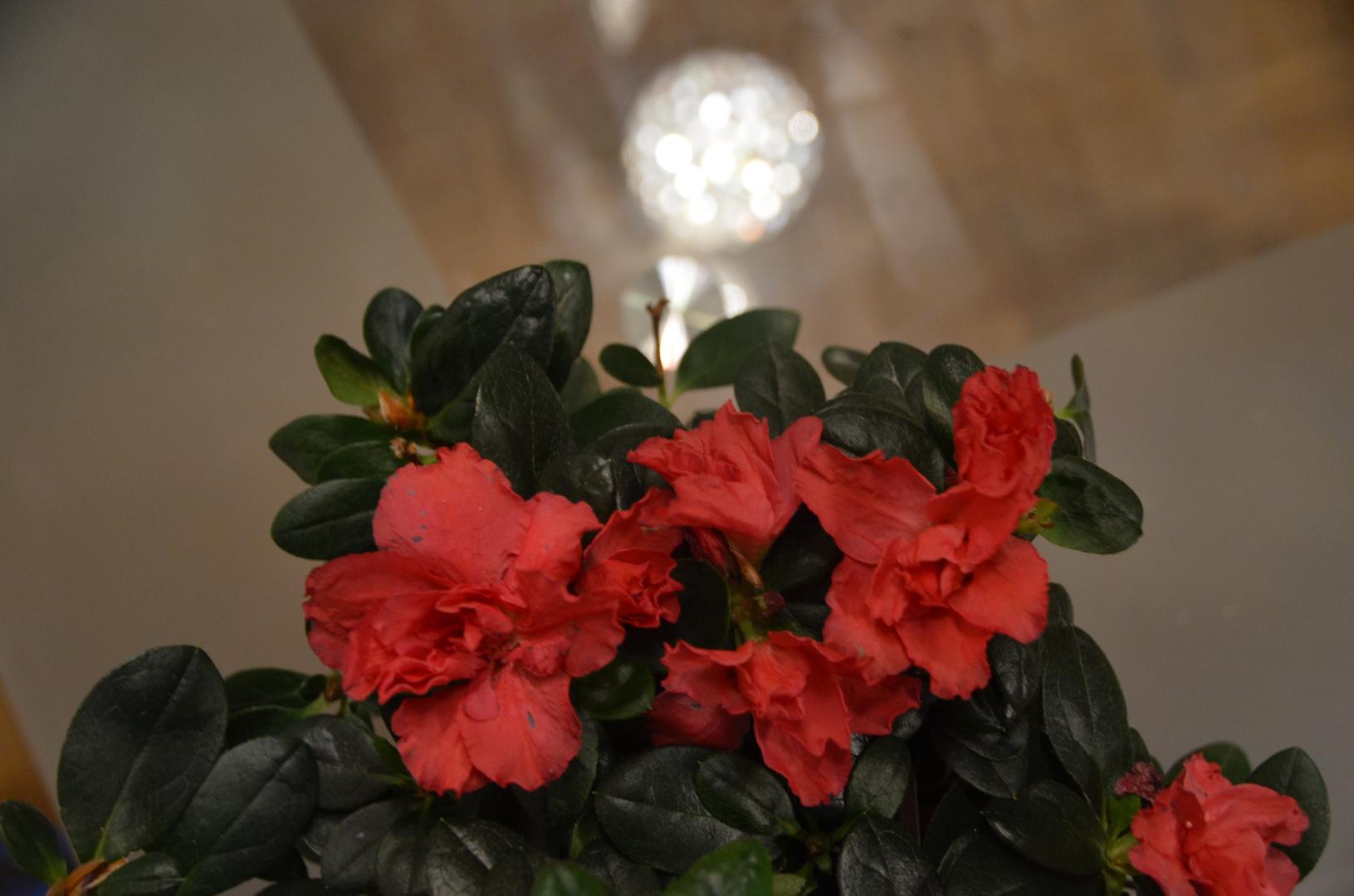 Strahlende Blumenfamilie :)