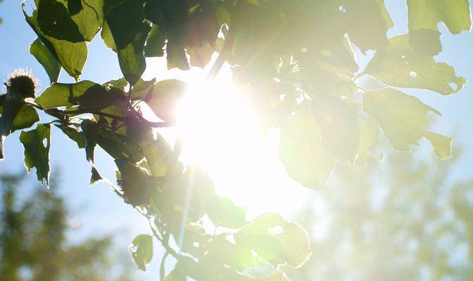 Strahlende Sonne durch die Blätter