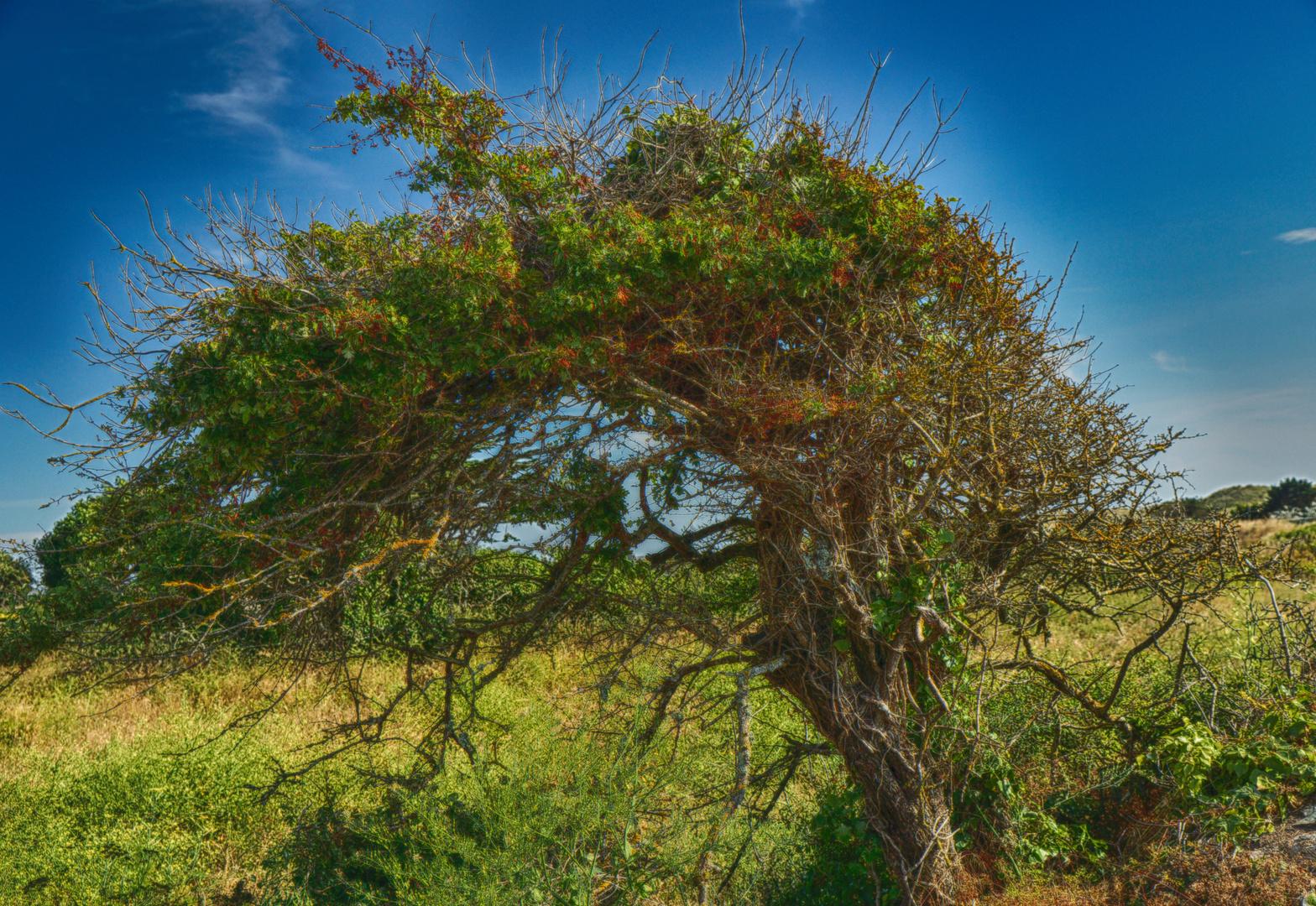 strahlender Baum