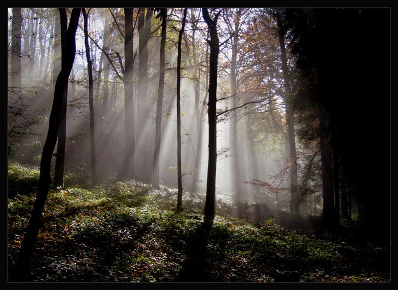 """Strahlender Herbstwald"""