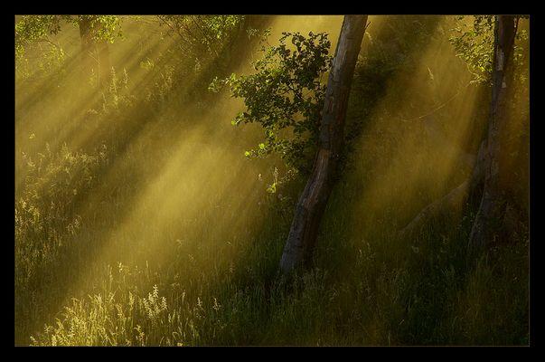 Strahlender Sommernebel #3 - Goldener Lichtschauer
