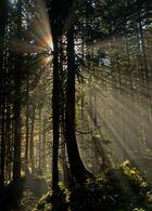 """Strahlender"" Wald"