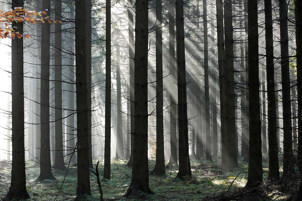 Strahlender Wald