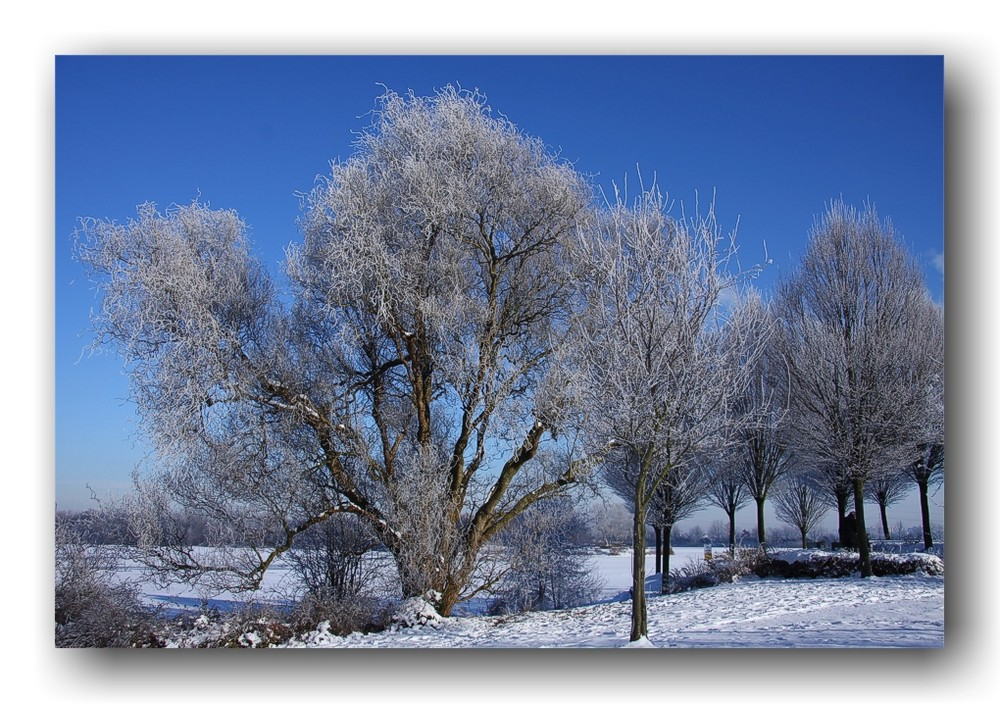 Strahlender Wintermorgen (1)