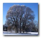 Strahlender Wintermorgen (2)