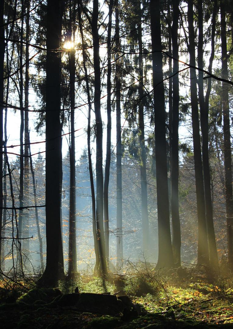 Strahlender Wintertag 2014