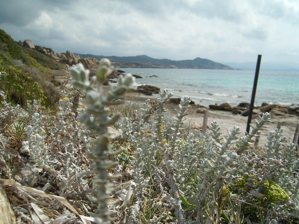 Stran von Capo Testa - Sardinien