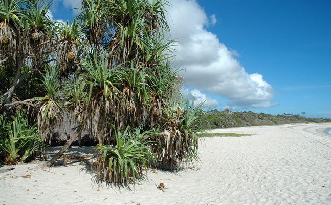 Strand an der Südküste Tansania