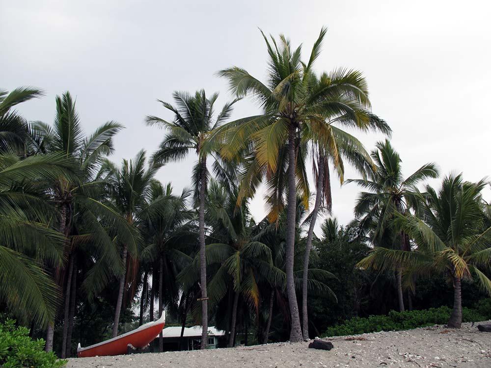 Strand auf Hawaii mit rotem Boot und Palmen