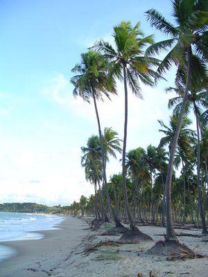 Strand bei Recife - Brasilien