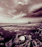 Strand Forscher