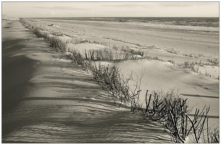 Strand Impression I