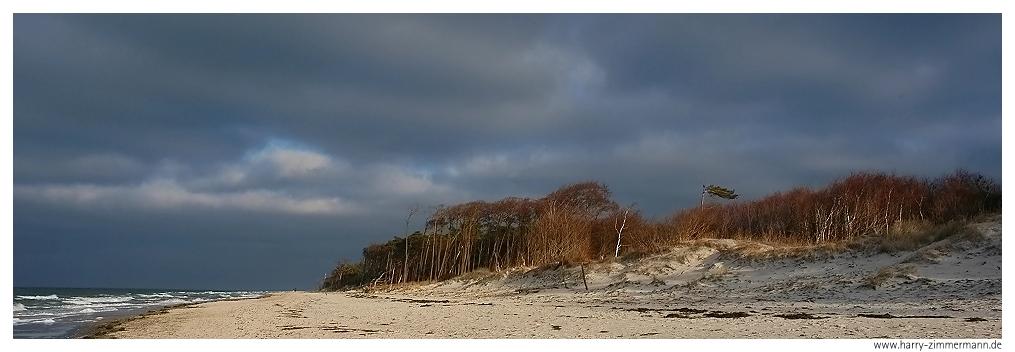 Strand und Wald