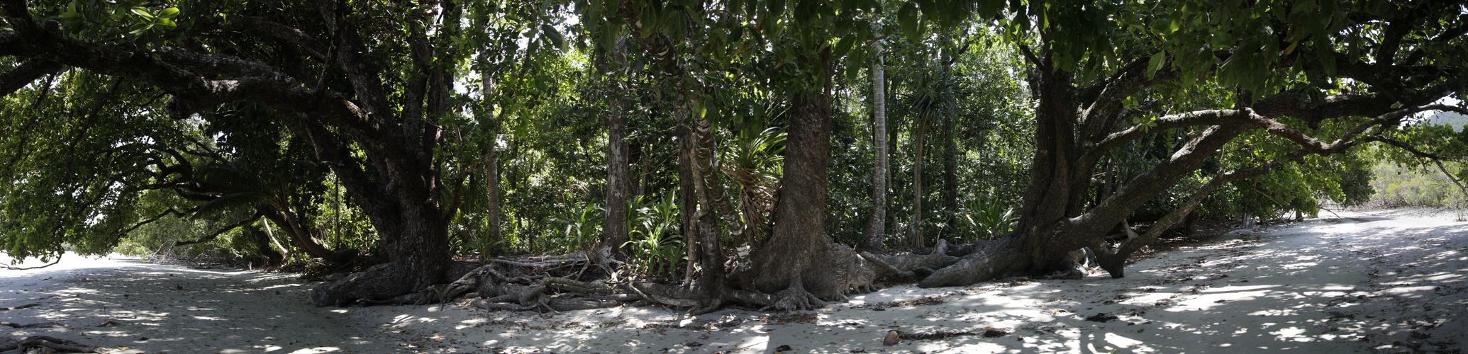 strandbäume
