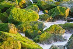 Strandbefestigung im grün