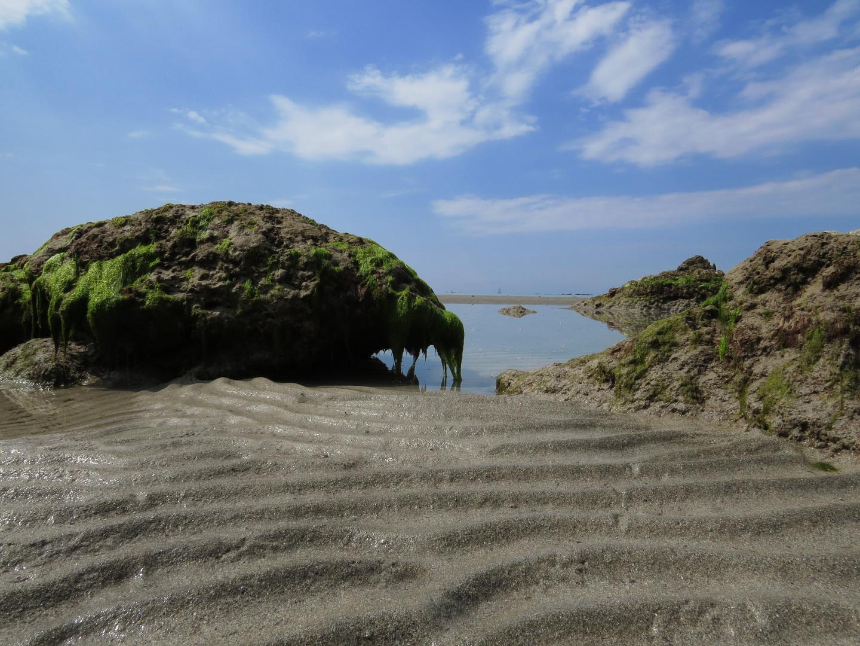 Strandbegegnung *Urtier oder einfach nur ein ...*