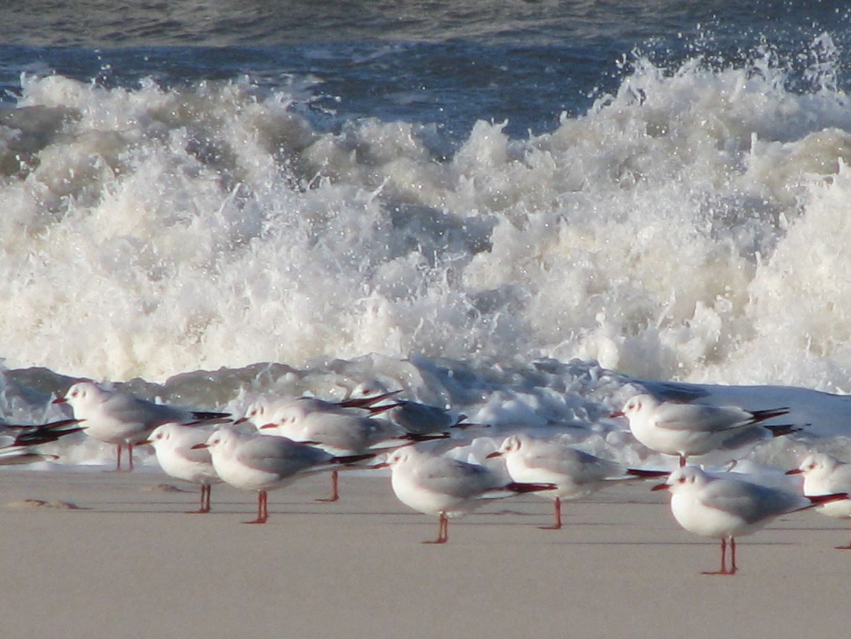 Strandbewohner