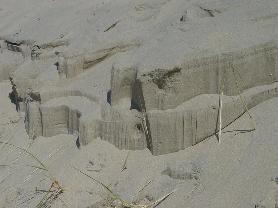 Stranddüne Zoutelande