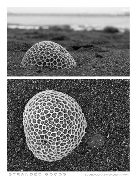stranded coral