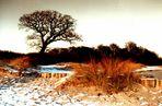Strandeiche im Winter