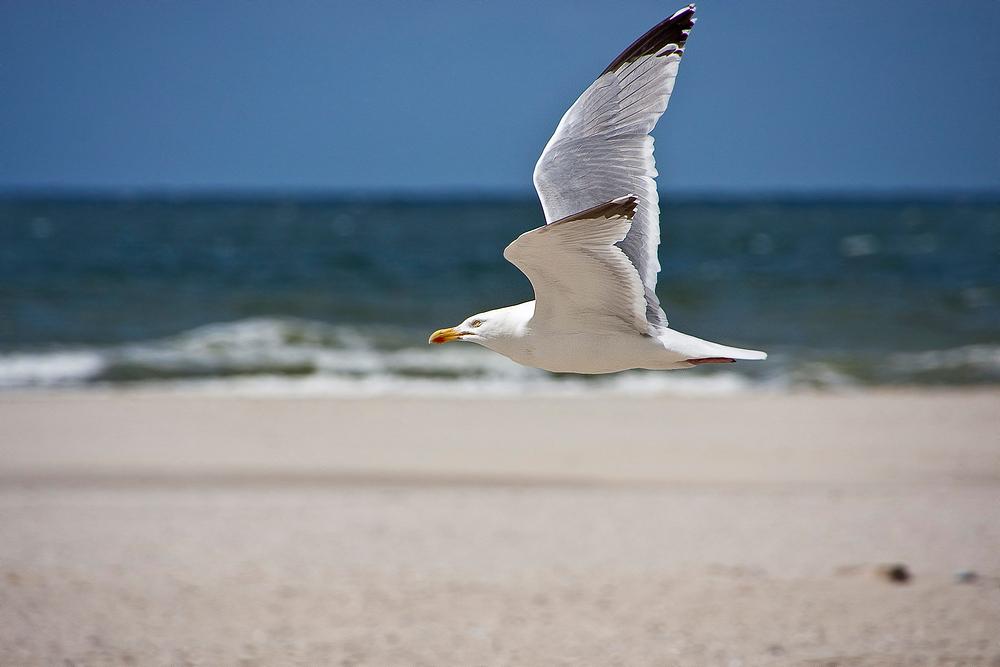Strandflieger