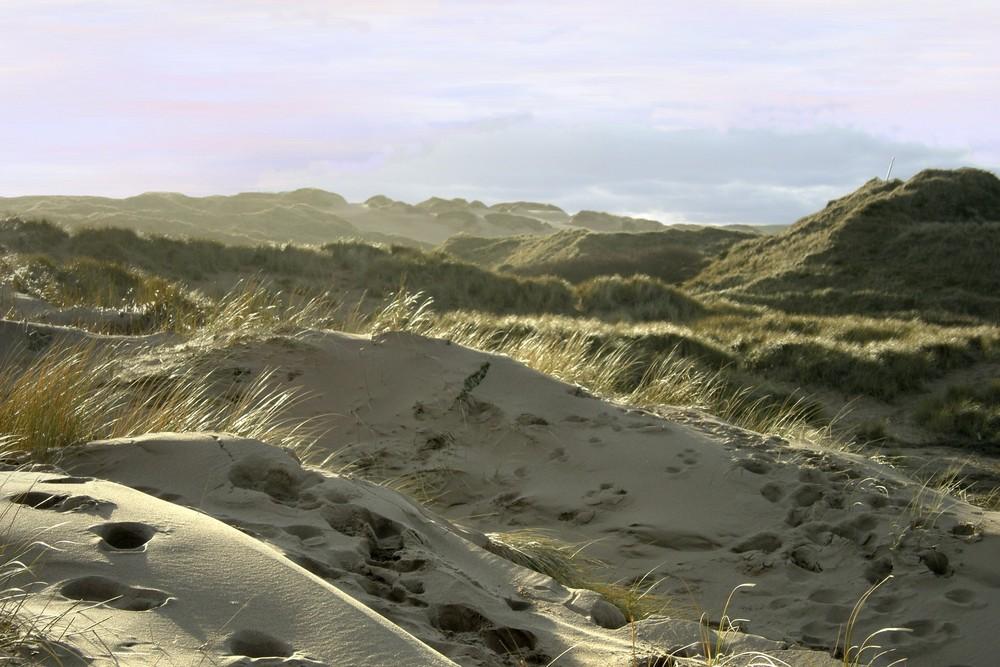 Strandgestrüpp