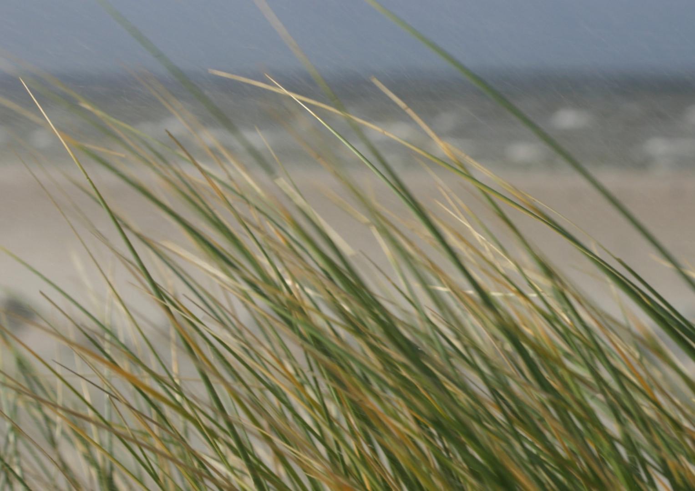 Strandgrass