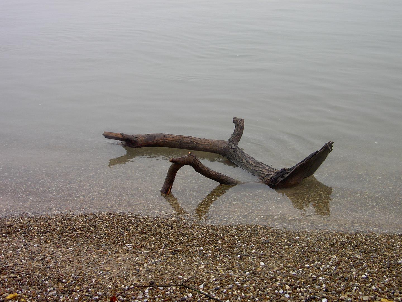 Strandgut am Rhein