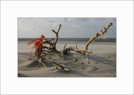 Strandgut auf Borkum