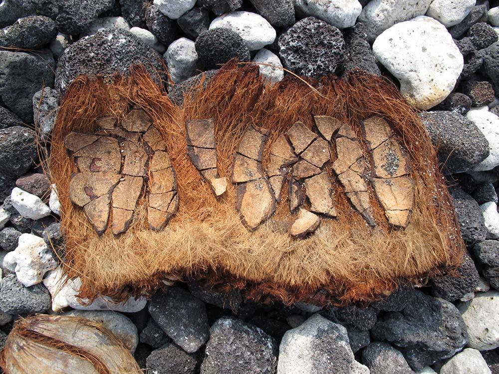 Strandgut auf Hawaii - getrocknete Rinde einer Kokosnuss