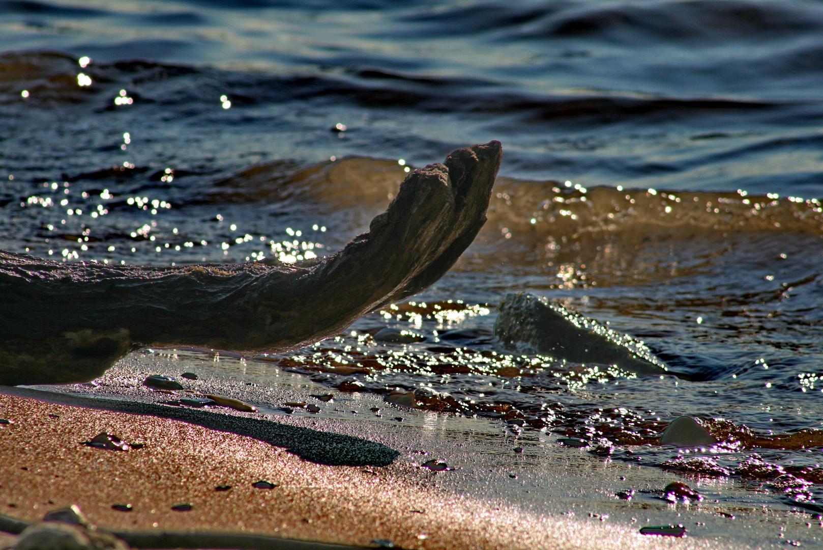 Strandgut- Das Holz am Wasser