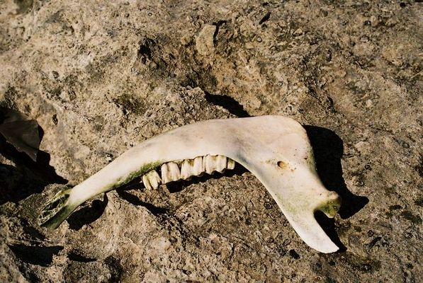 Strandgut - Der Zahnarzt würde sich freuen
