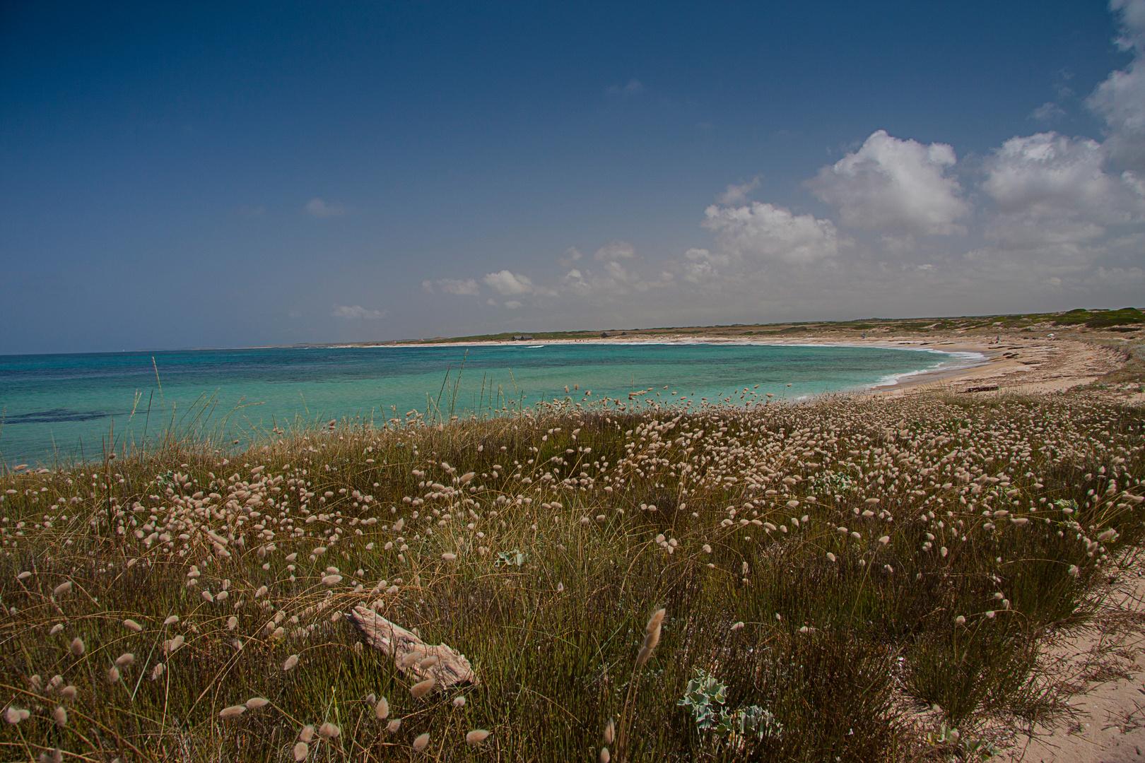Strandimpressionen Westküste